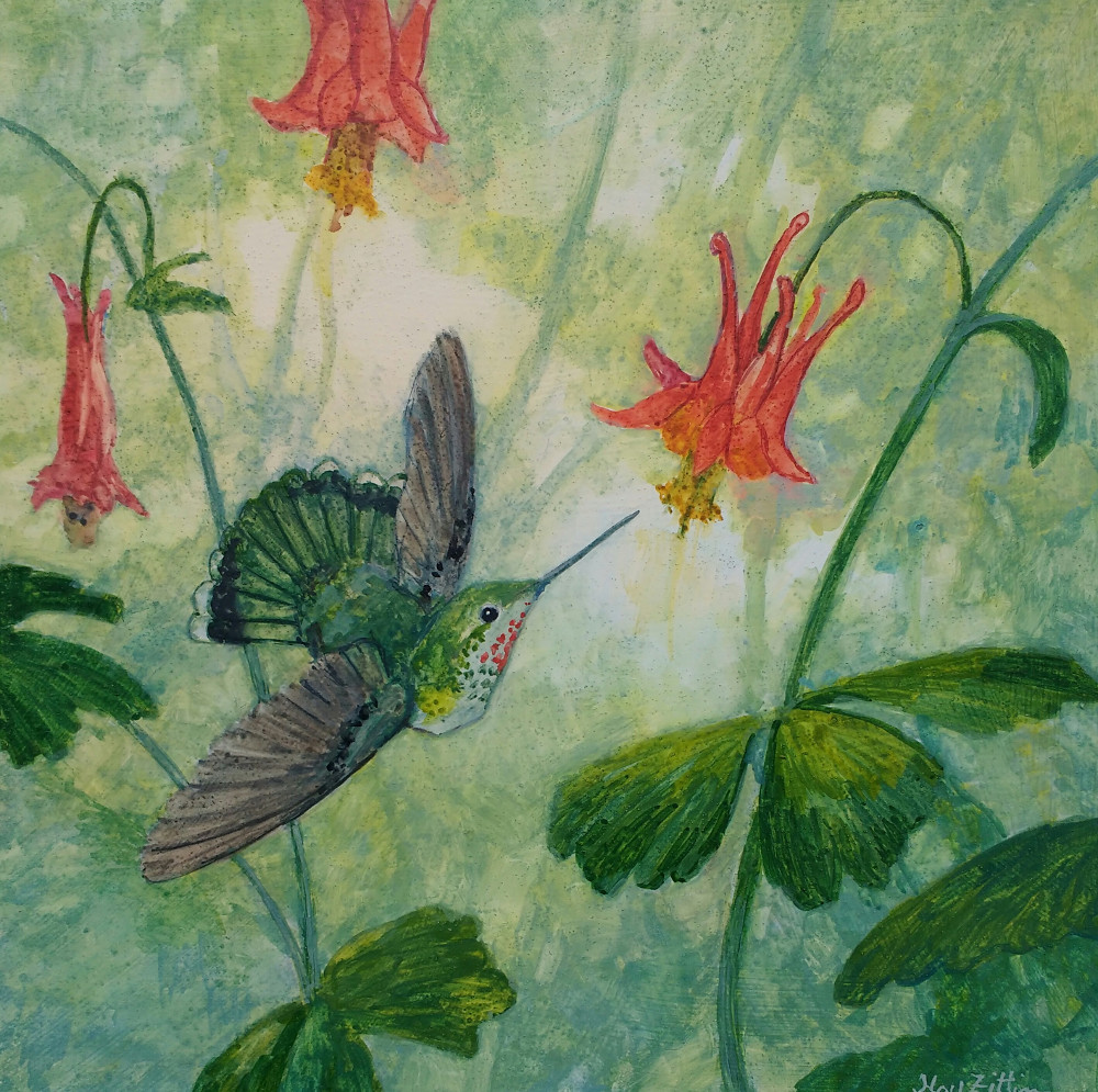 hummingbird columbine1000.jpg