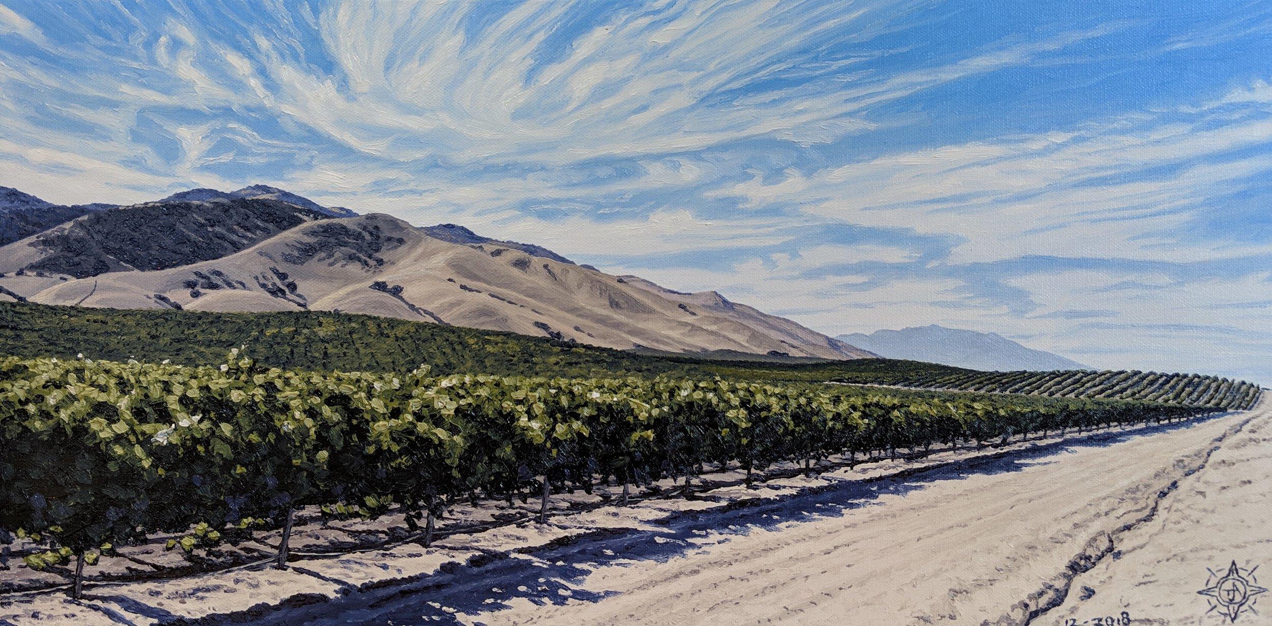 Bassetti Vinyard, Salinas Valley 24 x 12.jpg