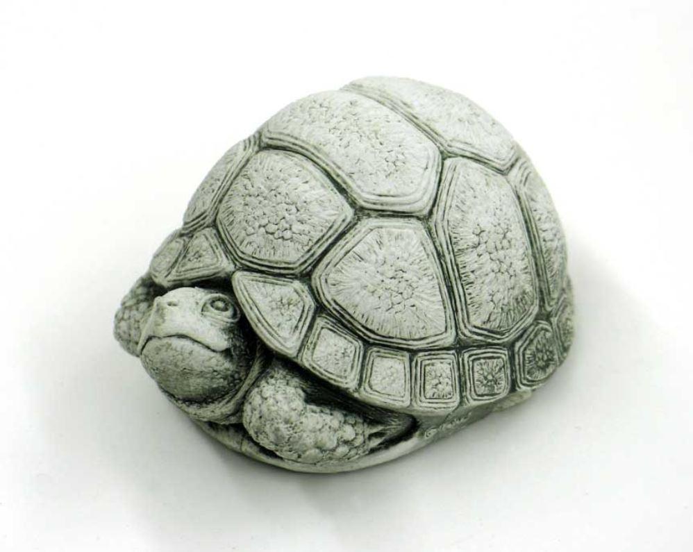 Turtle Toddler.JPG