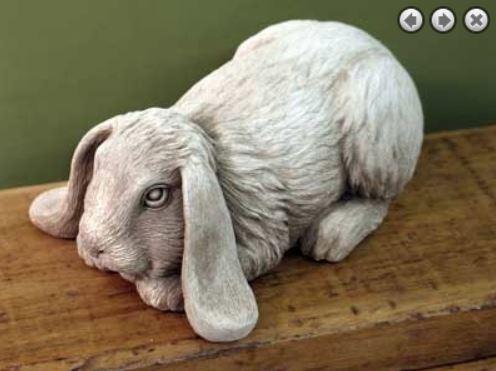 Bashful Bunny 331.JPG