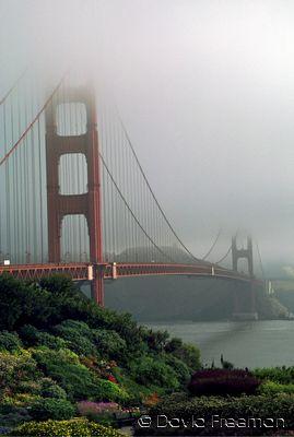 Golden Gate Bridge With Flowers.jpg
