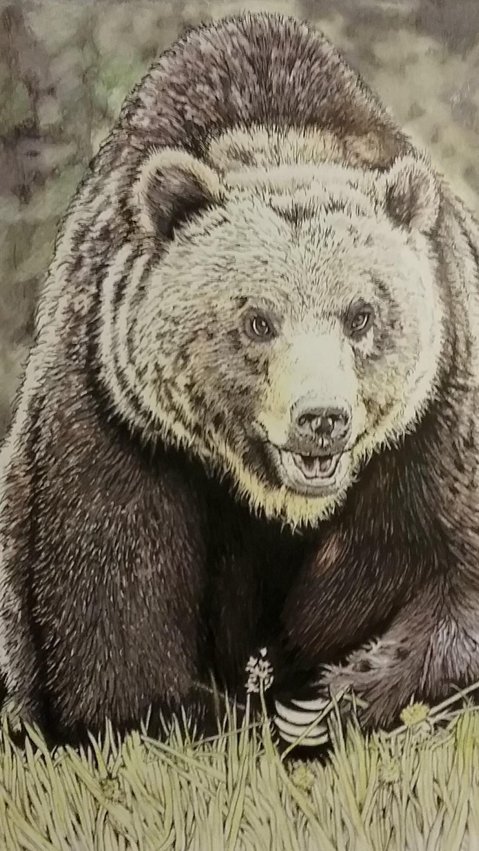 Bear Walking.jpg