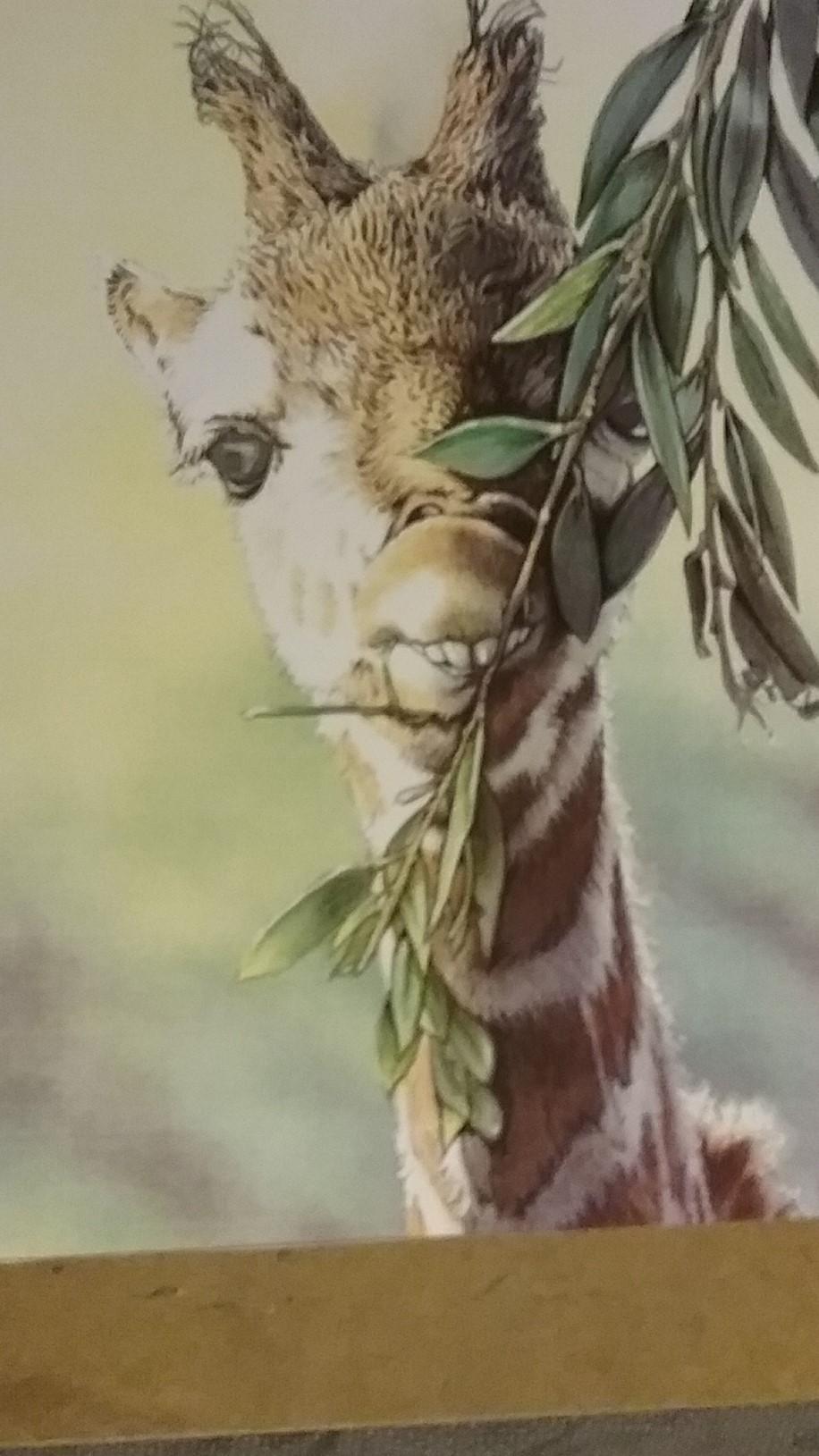 Giraffe yum.jpg