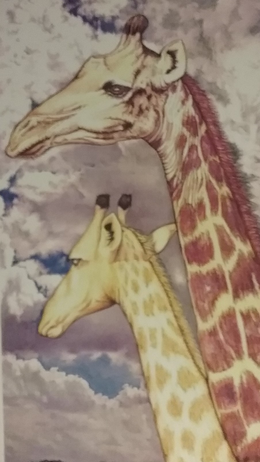 Two giraffes heads.jpg