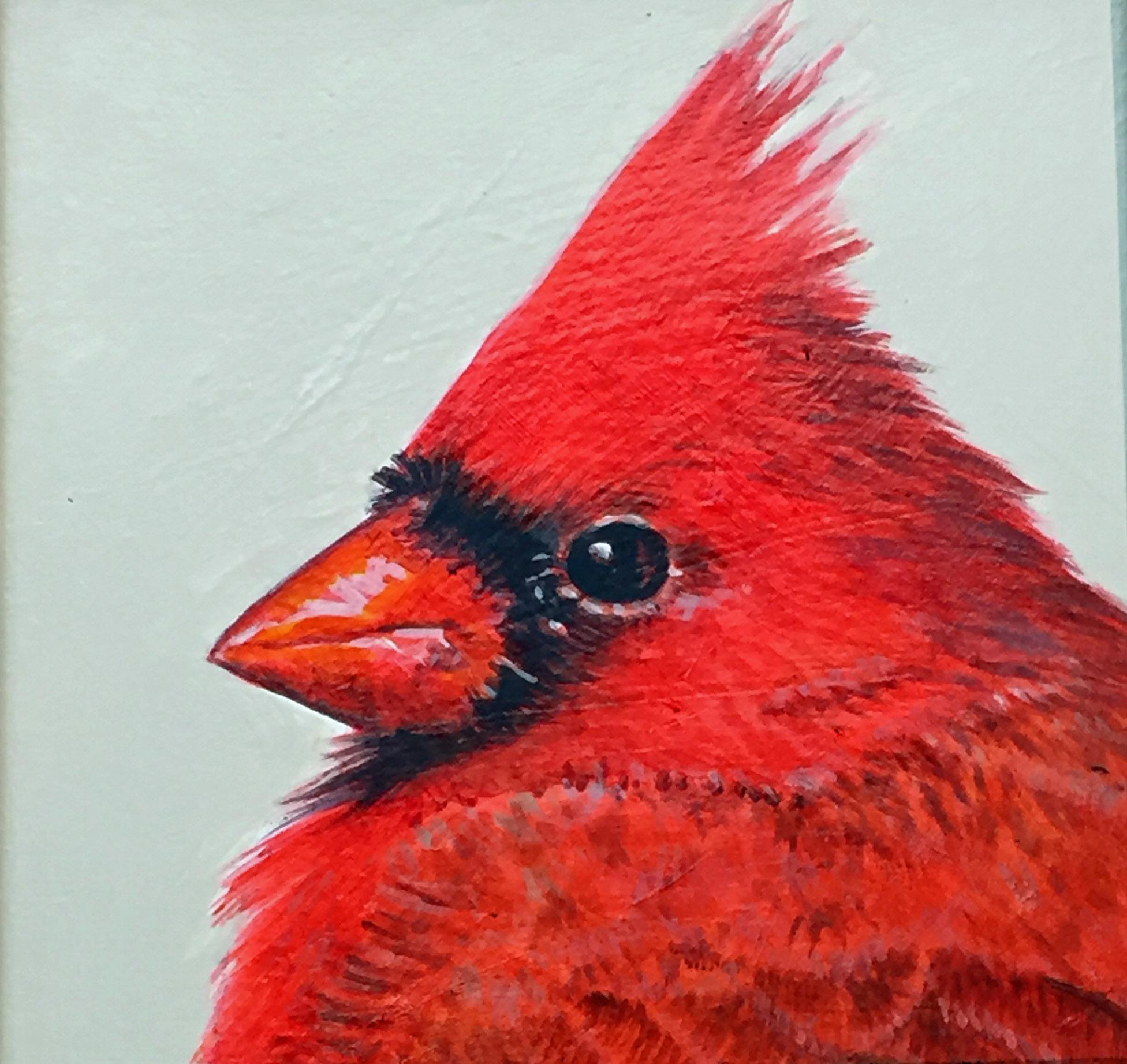 Cardinal 6x6.JPG
