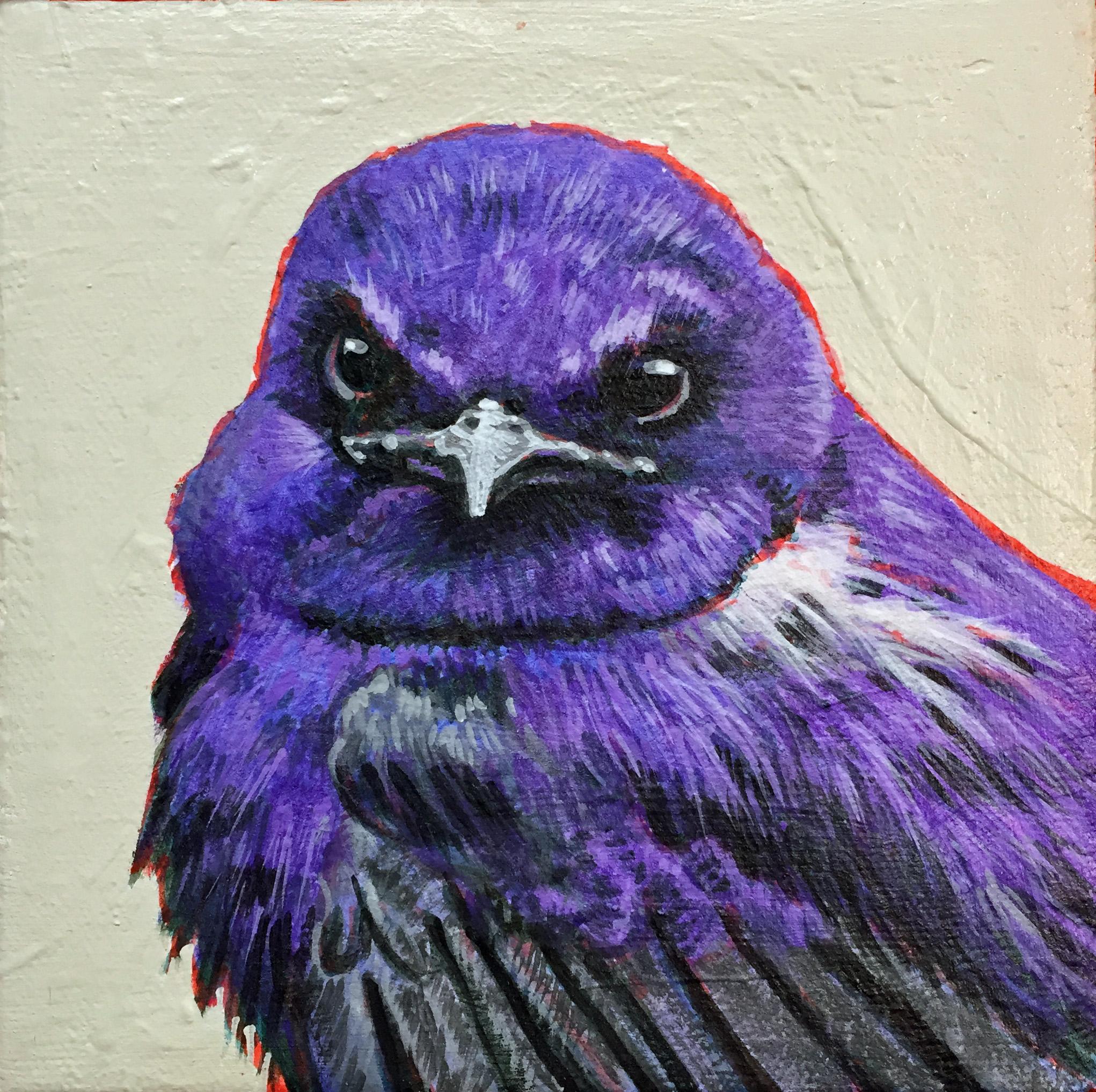 Purple Martin 6x6.JPG