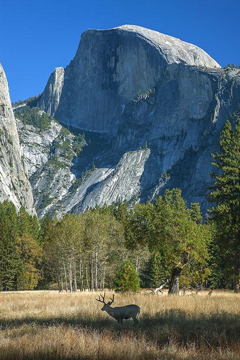 Yosemite 2269 24x36.jpg