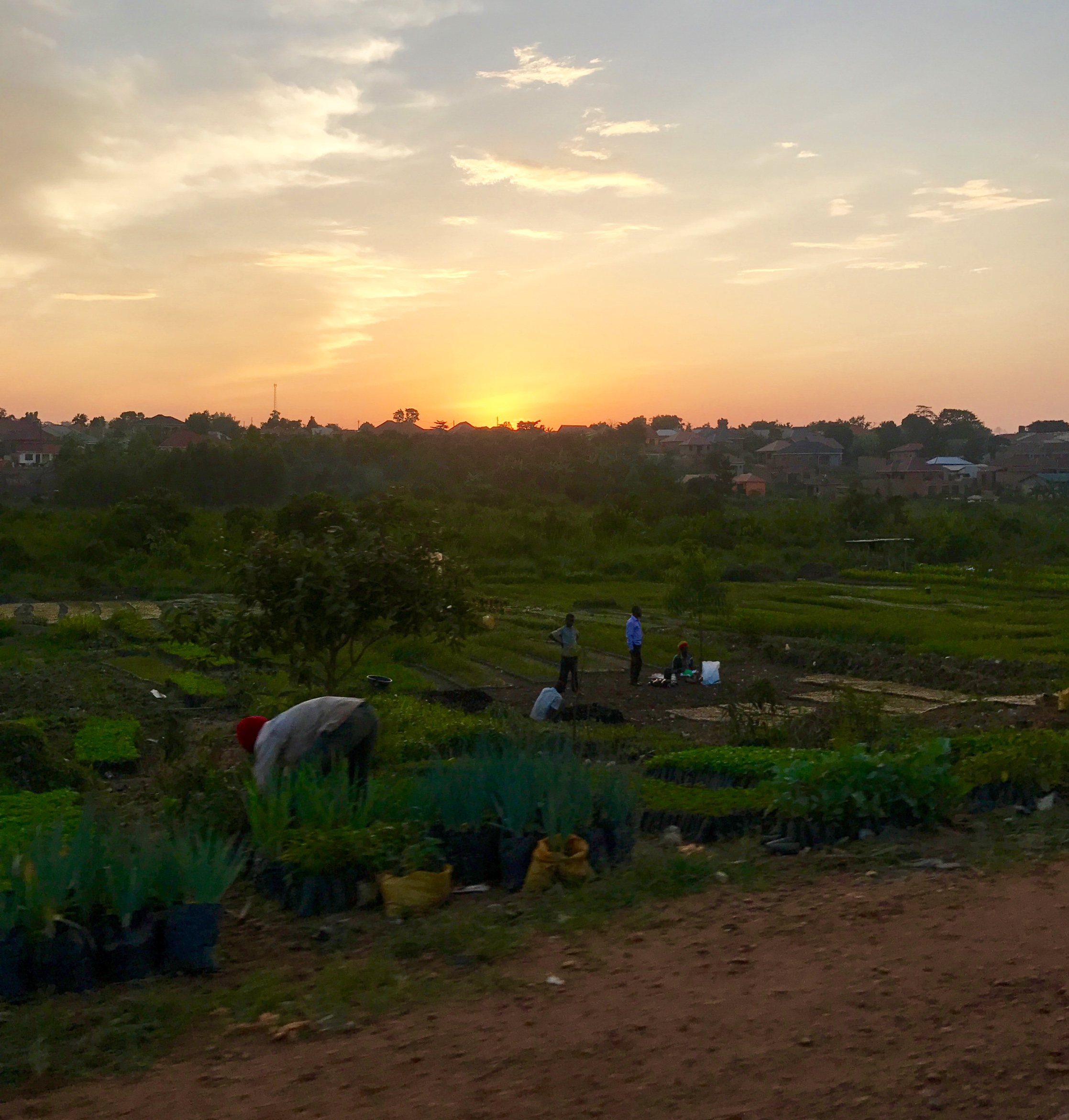 Sunset in Uganda - Photo by Carter Martens