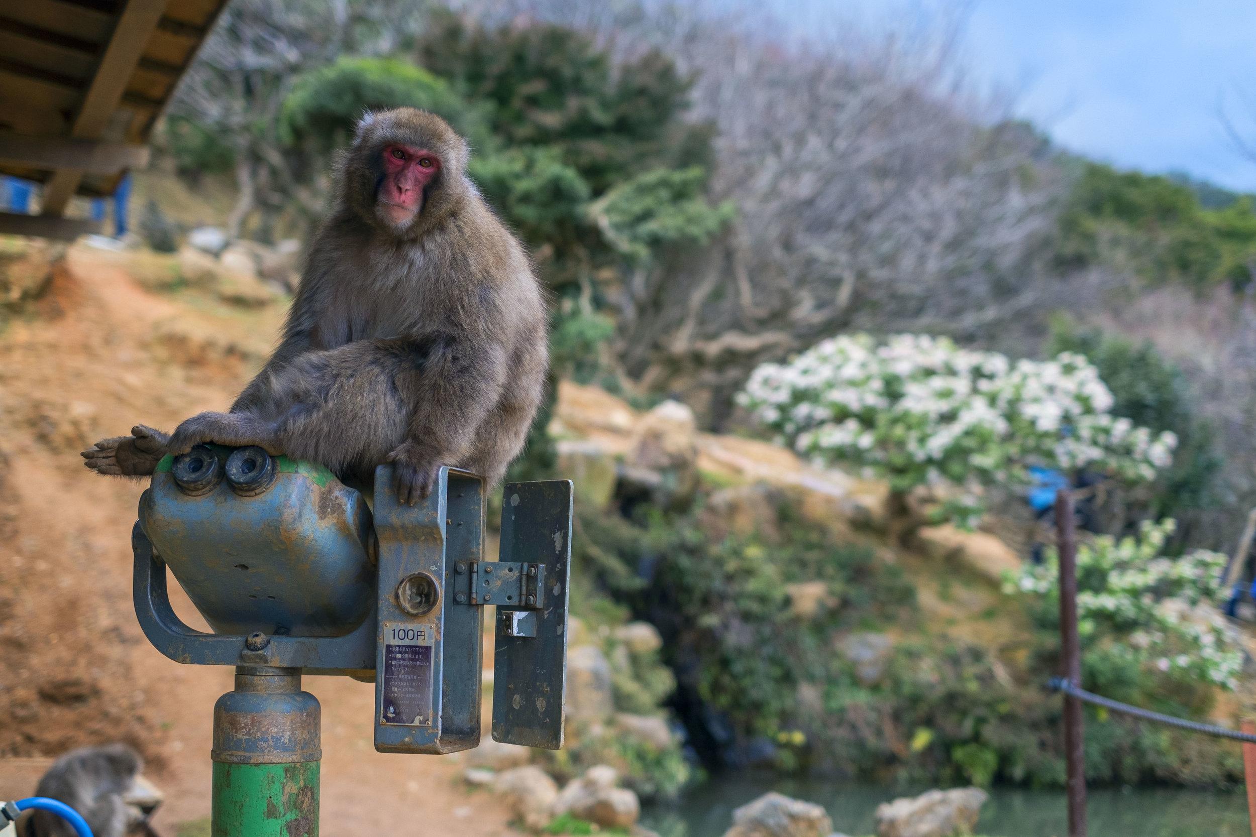 Kyoto_Monkeypark_Day2_monkey2.jpg