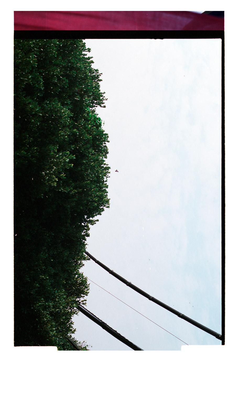 The Lush [Bird in Flight] 2007, (2013). 85x50cm. Archival Inkjet Print on Hahnemühle Photo Rag. Edition of 5 + 2AP.