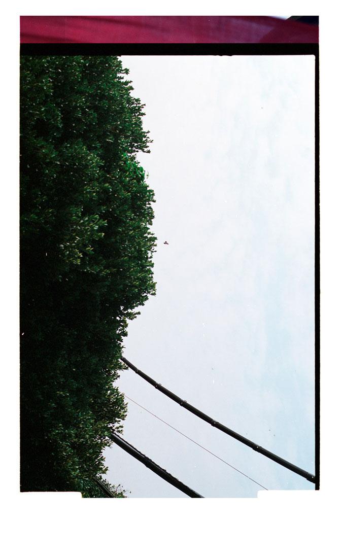 The Lush [Bird in Flight] 2007 (2013).
