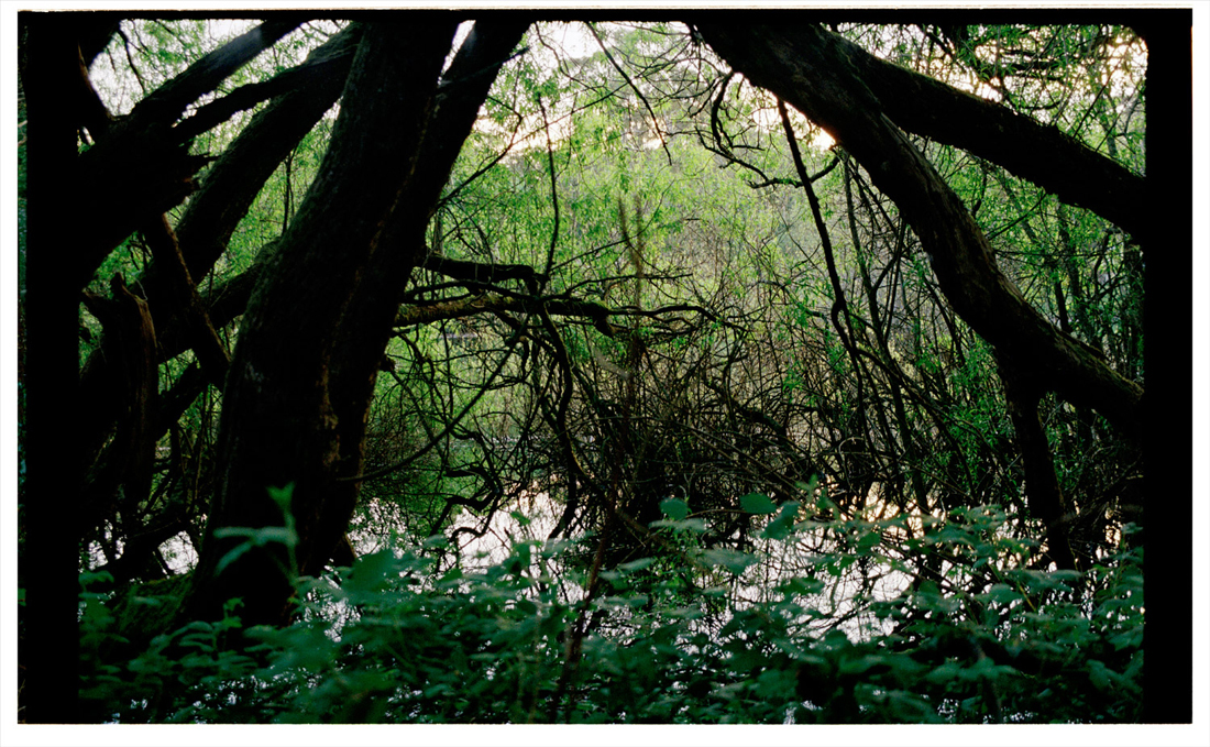 4.6 The Overgrown. 2011. Archival Inkjet Print on Hahnemühle Photo Rag. 90 x 43cm. Edition of 5 + 2 AP.