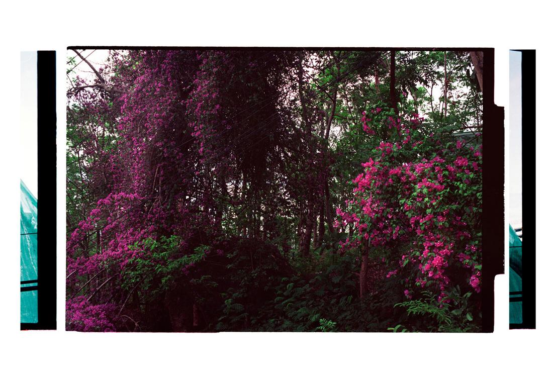 4.3 A Canopy of Colour, [The Draperies: [Floral Arrangement]. 2011. Archival Inkjet Print on Hahnemühle Photo Rag. 77 x 112cm. Edition of 5 + 2 AP.
