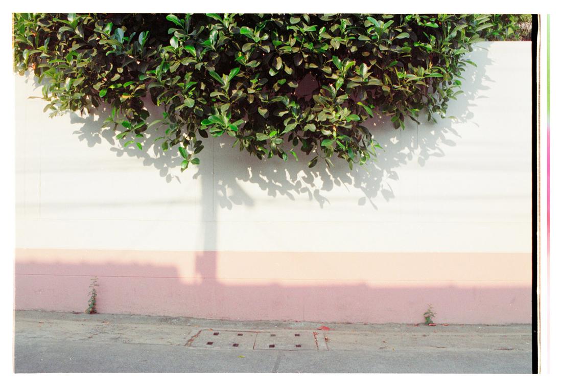 Soft Light on the Hedges. 2015.