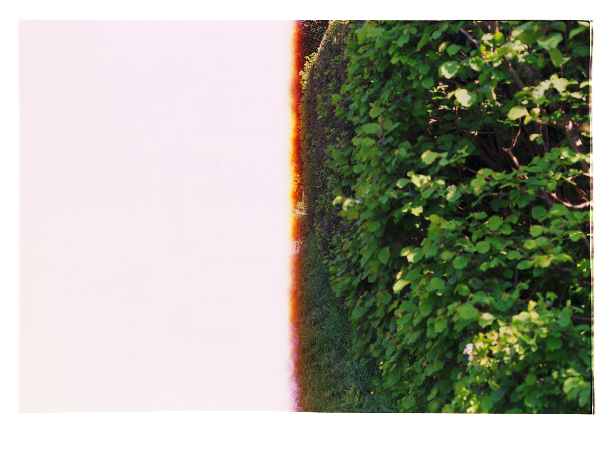 As Green as the Hedges. Archival Inkjet Print on Hahnemühle Photo Rag. 67x46cm Edition of 5 + 2 Ap.