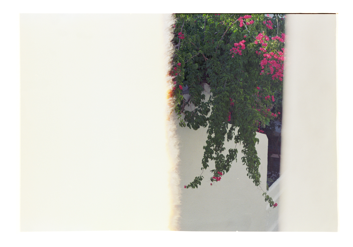Endless Beginnings [Bougainvillea/Cadaques] 2016 [2015]. Archival Inkjet Print on Hahnemühle Photo Rag. 71.44x50cm Edition of 5 + 2 Ap.