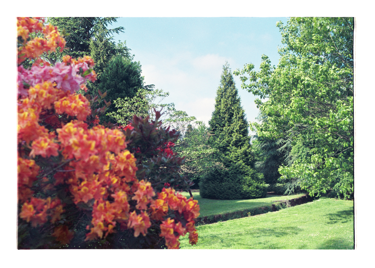 Orange field (Rhododendrons and the grounds I knew well). Archival Inkjet Print on Hahnemühle Photo Rag. 68.39x50cm Edition of 5 + 2 Ap.