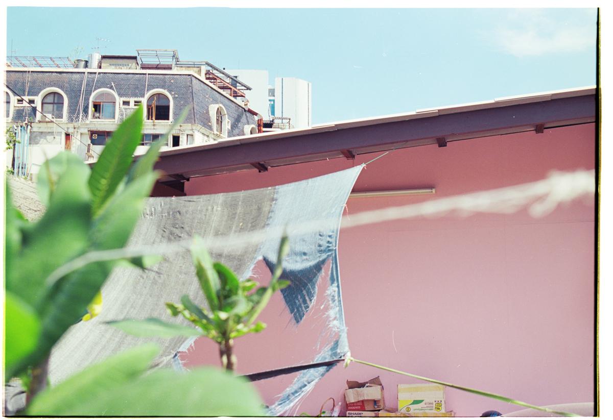 melanie-jayne-taylor-pink_backdrop-for-everything.jpg
