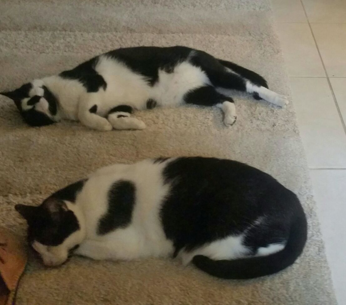 28_7_2018_Cats_2.JPEG