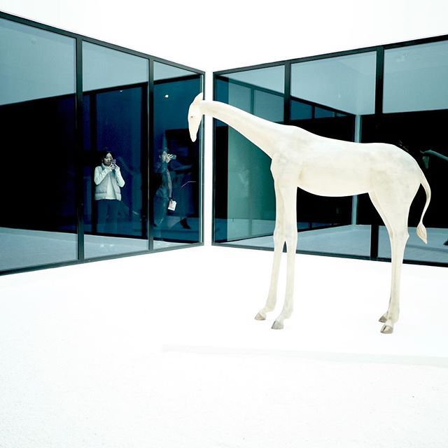 White giraffe cage in a museum. #conceptualphotography #china #museum #artmuseum #beijing #white #glass #giraffe #chinese #panasonic #gm5 #panaleica15mmf17 #micro43rds #microfourthirds — view on Instagram  https://ift.tt/2zpnZjY