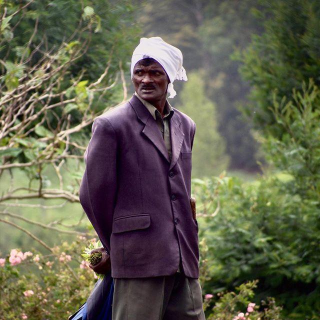 Retratos. Sri Lankan tea foreman #portrait #foreman #foremen #tea #plantation #nuwaraelyia #srilanka #SL #south_asia #subcontinent #worker #micro43rds #microfourthirds #olympus #omd #em5 #lumixlens #asia #mist — view on Instagram  https://ift.tt/2GBiHIu