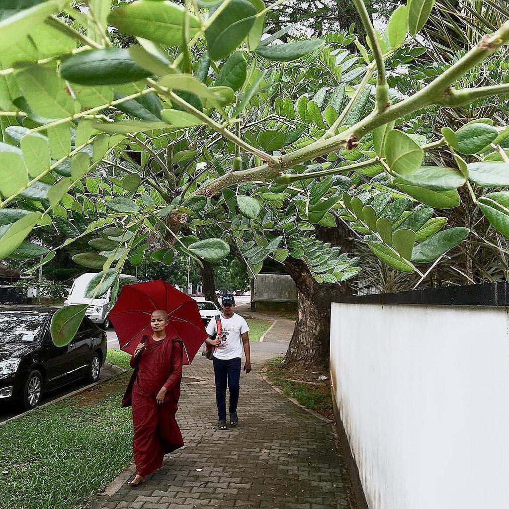 #monk #budhism #colombo #sri_lanka #ceylon #umbrella #red #tree #streetphotography #Flickr