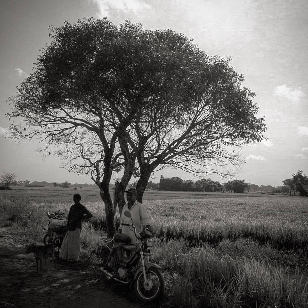 Sri Lankan fields #ceylon #sri_lanka #blackandwhite #fields #tree #landscape  (at North Central Province, Sri Lanka)