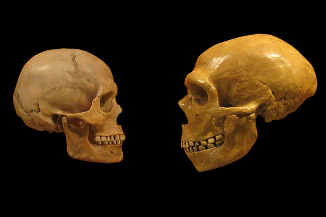 Study confirms that Neanderthals and humans got it on   By Arielle Duhaime-Ross,  theverge.com    The genet­ic sim­i­lar­i­ties between cer­tain human pop­u­la­tions and Nean­derthals are strik­ing. Indeed, many researchers think the Euro­peans and Asians inher­it­ed between 1 and 4 per­cent of their DNA from Nean­derthals, yet sci­en­tists ha…     Neanderthals and sapiens interbreeded, and some of us are their descendants