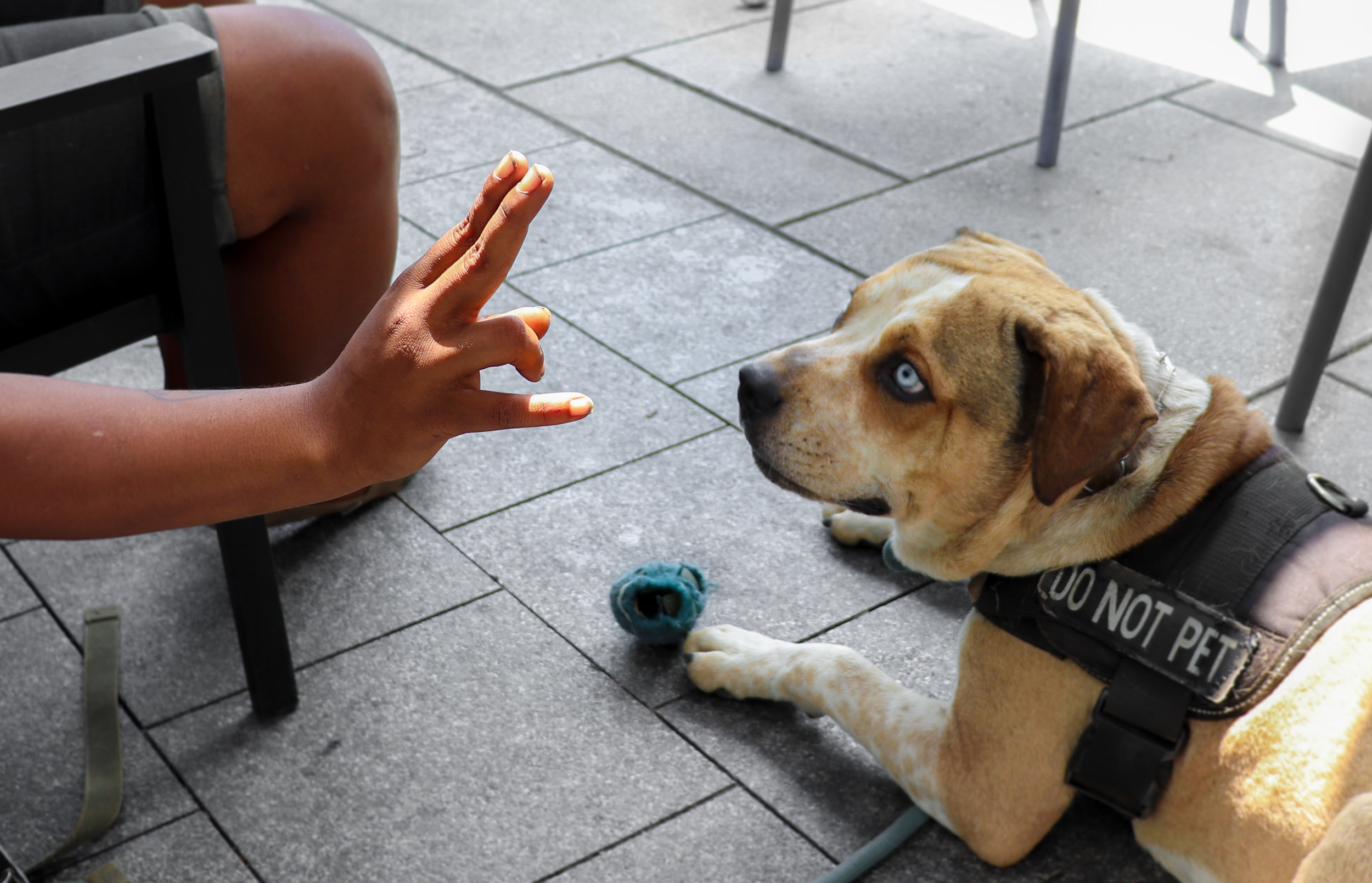 Calypso gestures to her dog, Shy Guy (named after the Super Mario character) outside of a Whole Foods Market.