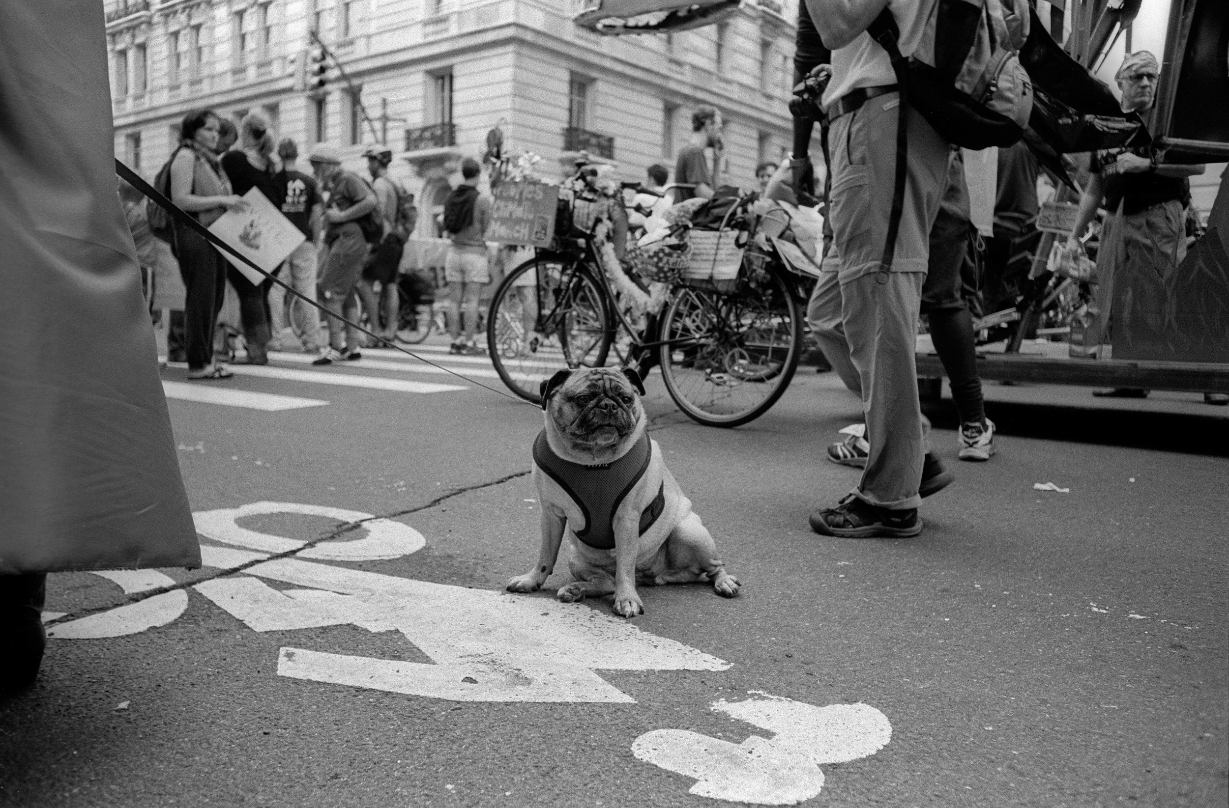 Defiance, NYC - 2015