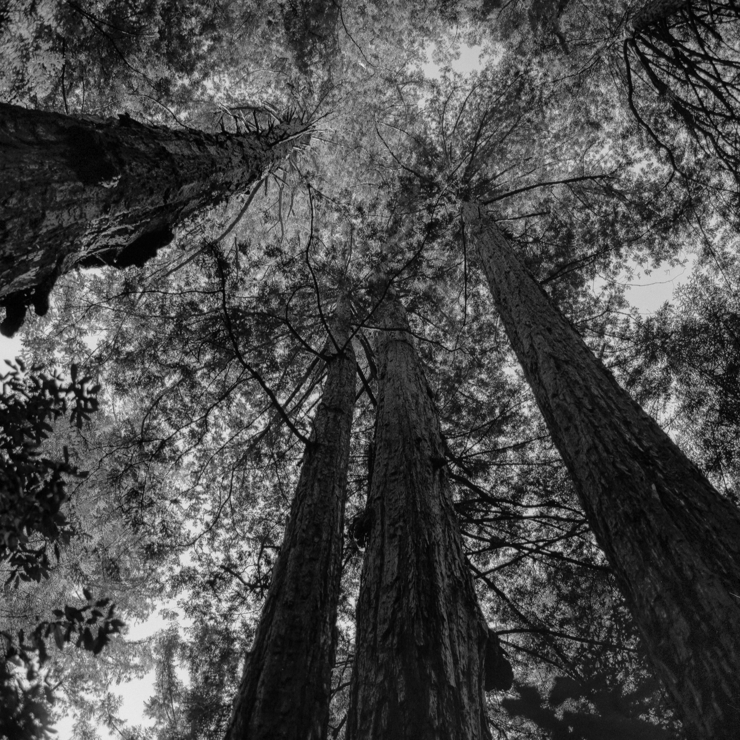 Redwood Canopy, California - 2016