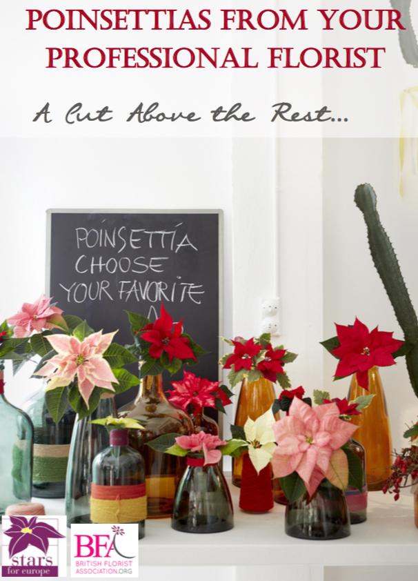 Poinsettia poster.jpg