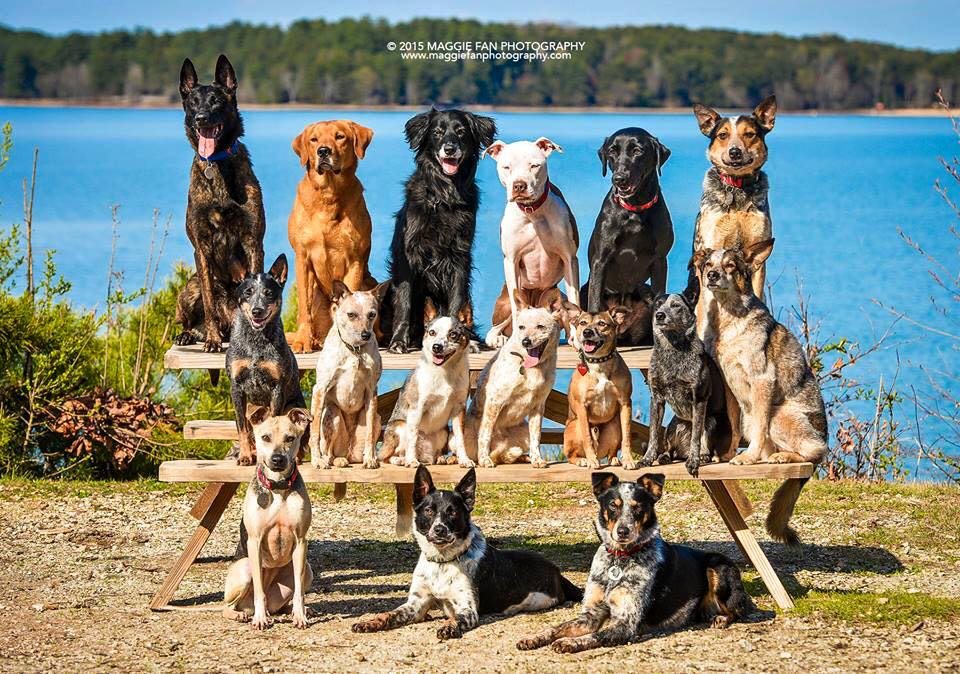 Meet The Marvelous Mutts