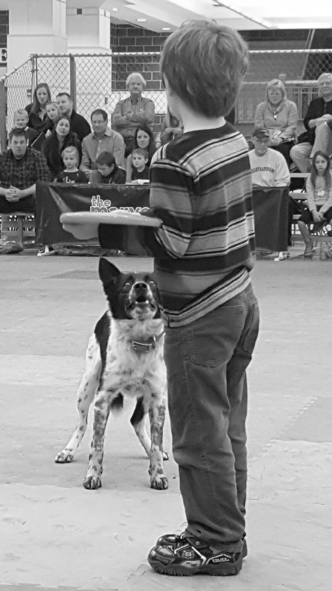A lucky volunteer gets picked to throw the frisbee for Mucho. Don't worry . . . he looks at everybody like that. ;-