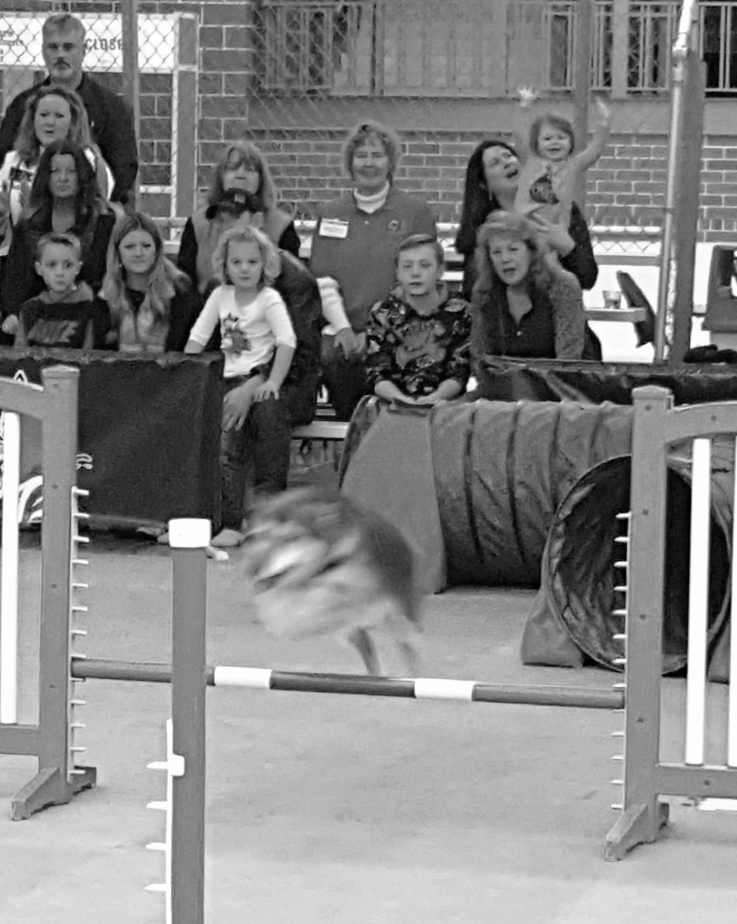 Henrik blazes through the agility course, and the crowd goes wild!