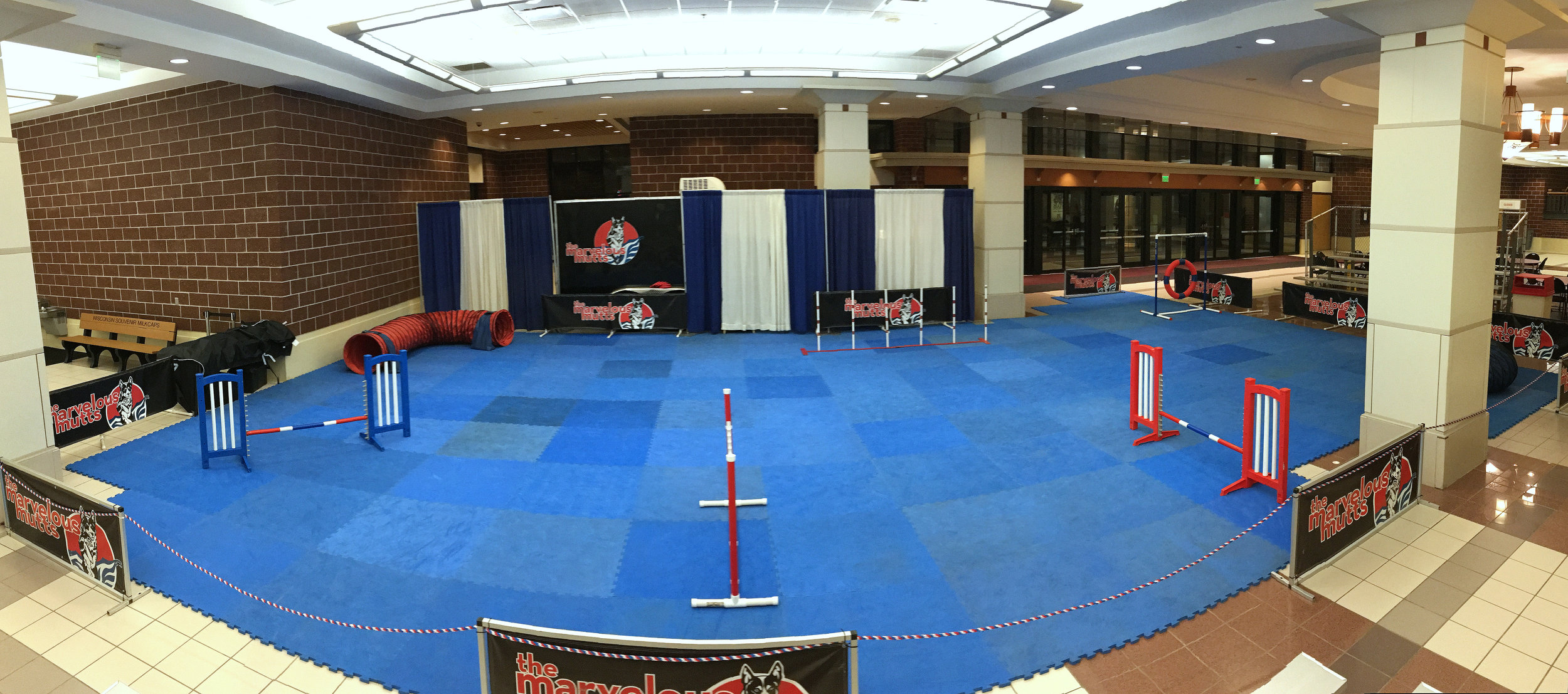 Our set-up for indoor frisbee/agility shows. We can accommodate unique space challenges, and we bring our own foam mat flooring for the dogs' safety.