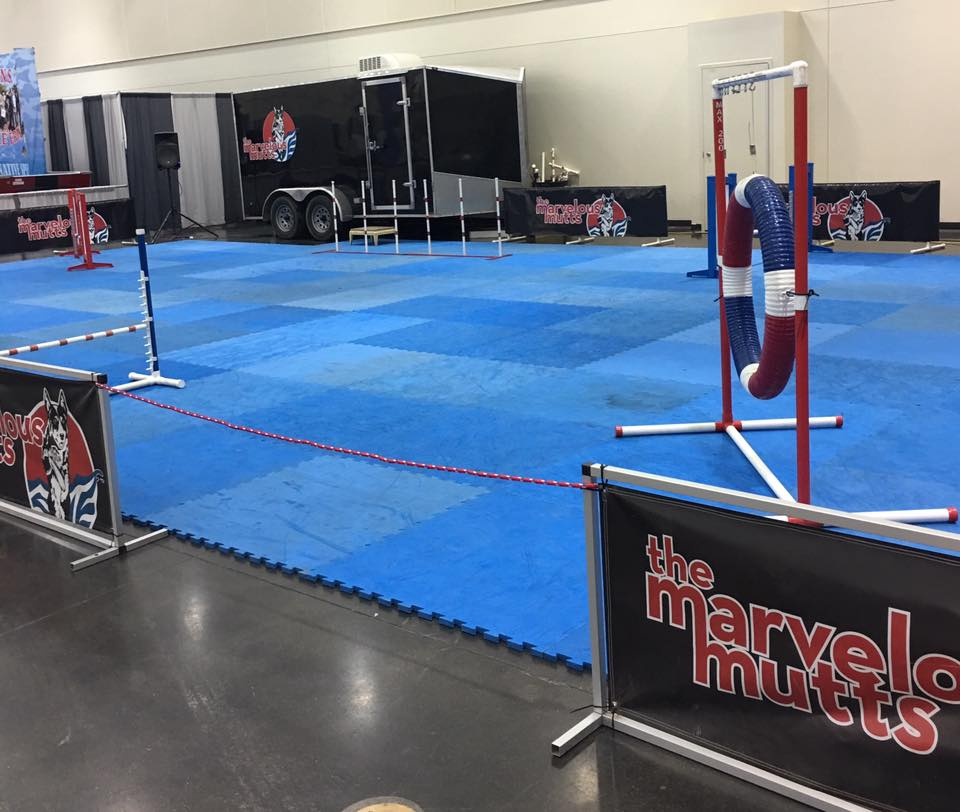 Our indoor setup in Erie, PA. Our flooring can be setup in just about any space, and creates a safe and grippy surface for our dogs.