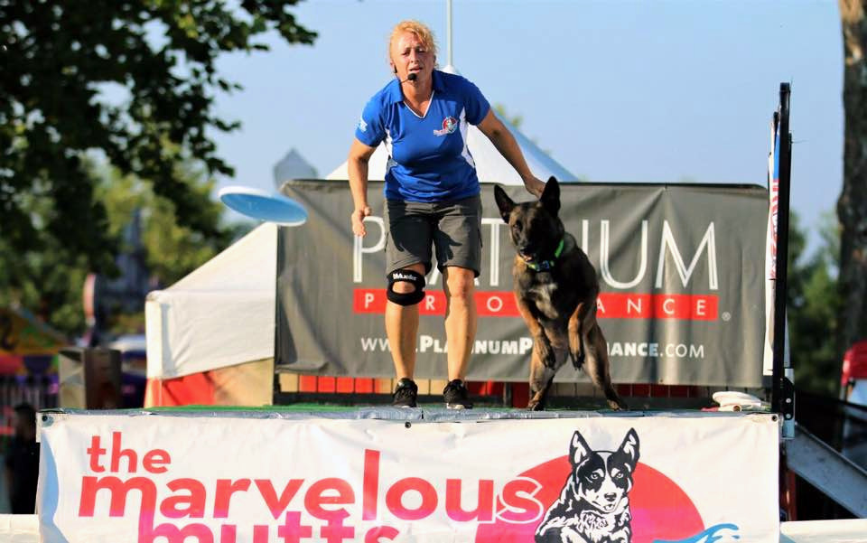 Vyper dock diving in Lexington. This Belgian Malinois is learning how to go big!