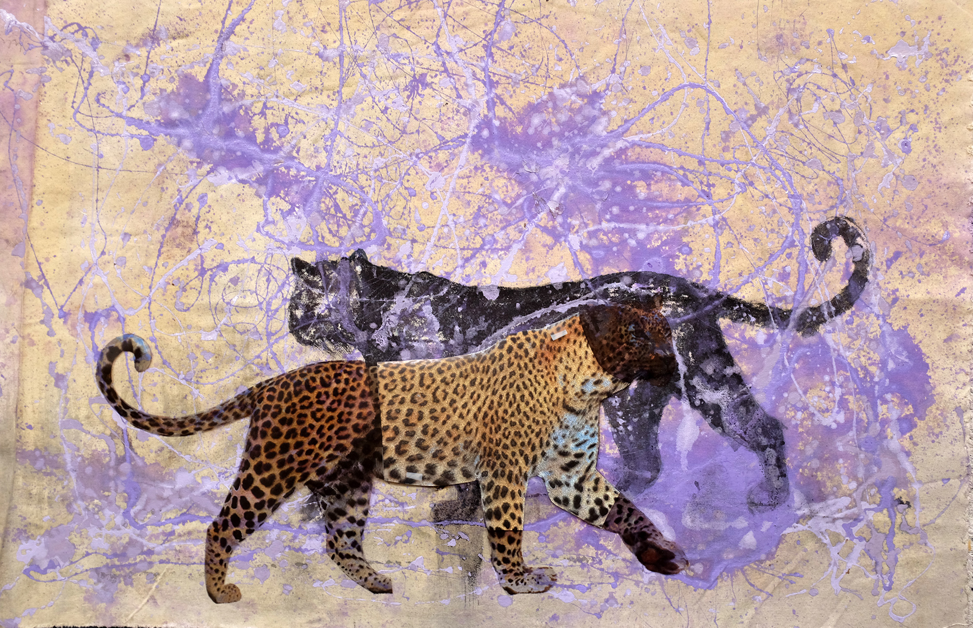 Leopards passing in a purple spatter milieu of time