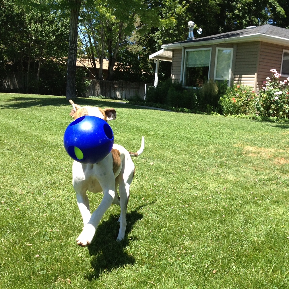 contact us_dog training services for salt lake city