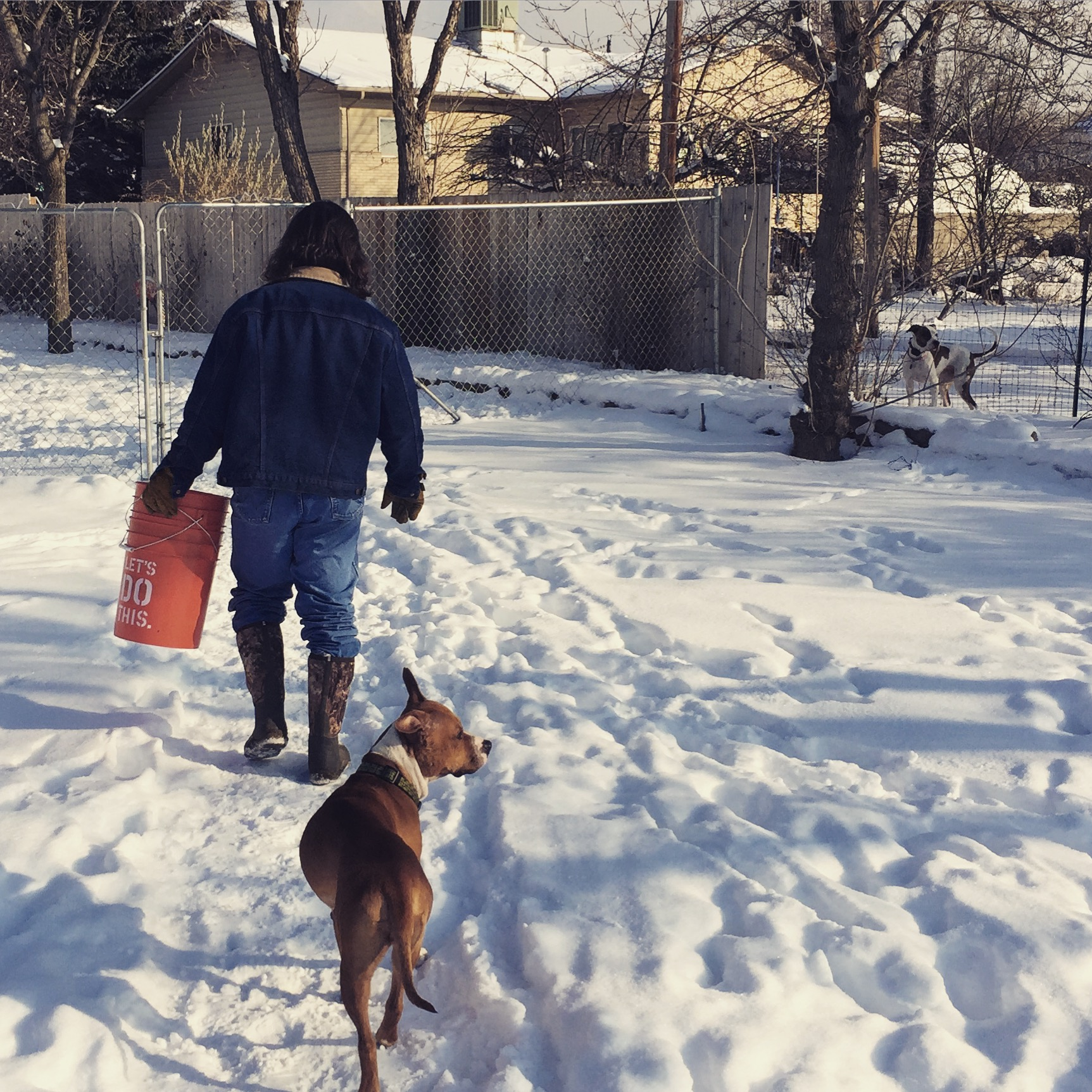 dog-training-utah