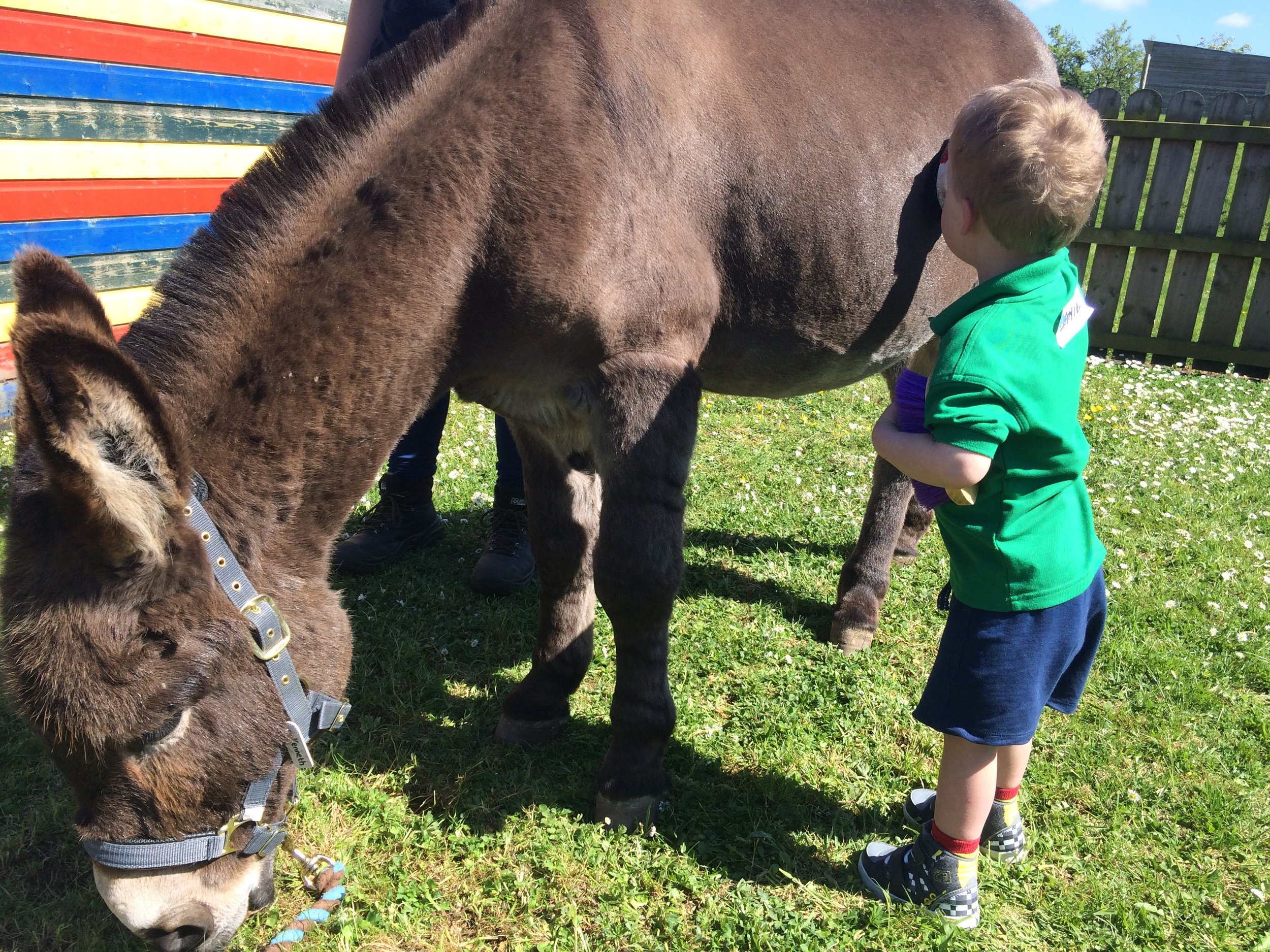 Therapy also involves groundwork like grooming the donkeys or making.their bed
