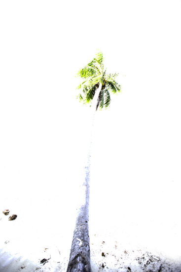 Chris Leidy  Sandy Palm  c-print 45 x 30 in. edition 1 of 5