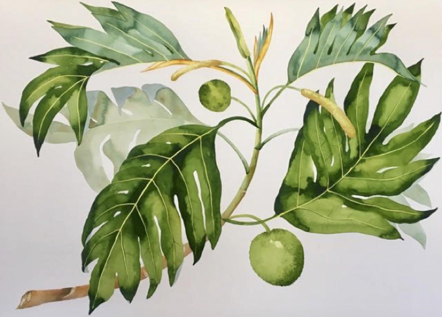 IDOLINE DUKE  Breadfruit Branch , 2019 watercolor on paper 30 x 41 in.