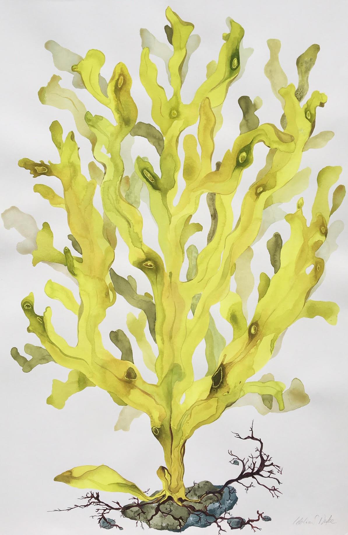 Idoline Duke  Yellow Seaweed II,  2019 watercolor on paper