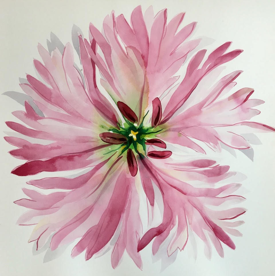 Idoline Duke  Pink Flower Imagined,  2019 watercolor on paper 20 x 20 in.