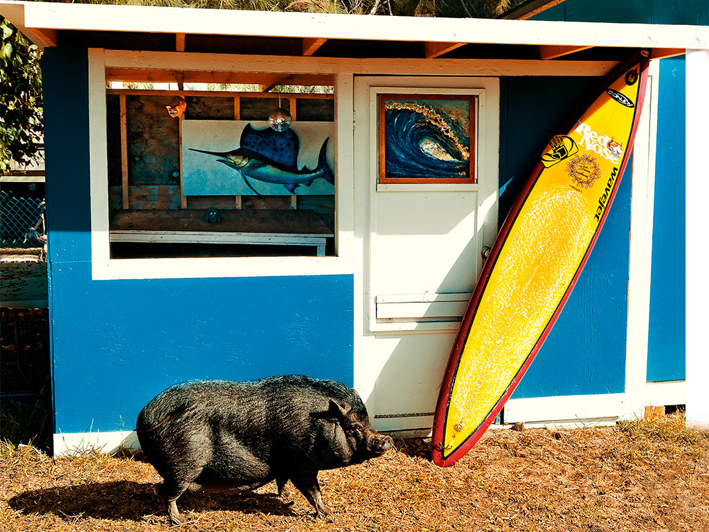 Thom Gilbert  Pet Pig (Garrett McNamara Home, Hawaii)  archival ink jet print with archival pigment ink on all cotton acid free paper 24 x 30 in.  also available in 17 x 22 in.  edition of 100