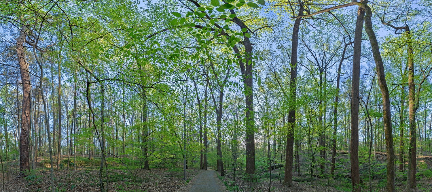 014_Forest Panoramic3:30:16.jpg