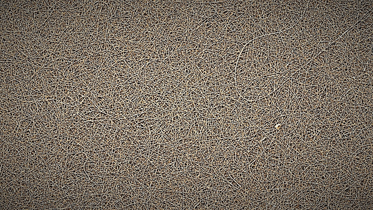 Electron micrograph showing structure of AAI dry adhesive. The dry adhesive is made up on millions of nano-fibers. The individual nanofibers are flexible and can weakly grip a range of surfaces through reversible, non-chemical interactions. The weak forces are multiplied across the fiber network to provide an extremely strong attachment in the direction of the fibers, but low removal force. The result is a non-tacky, high strength adhesive that can easily adjusted, repositioned, and reused without damage or residue.
