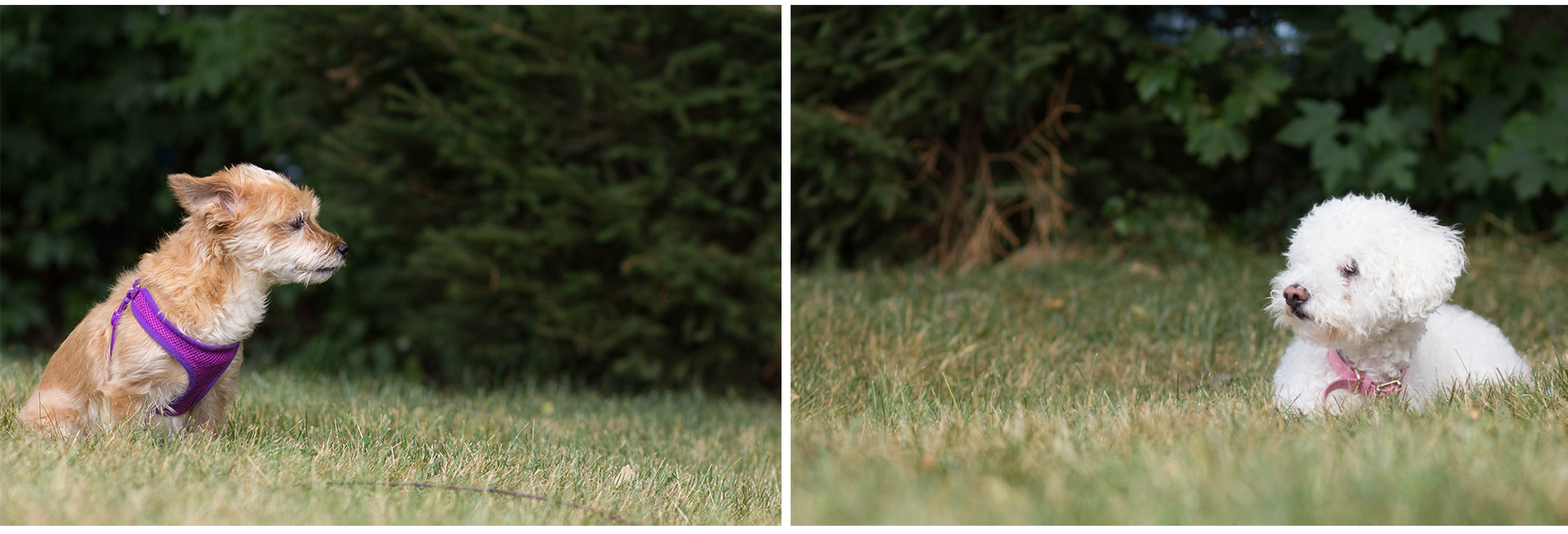 These two photos created a story, when I set them side-by-side. My only regret is that the line of the grass is wrong. I was lower for Luna. which was unfortunate. I will re-shoot this at some point, though, because it makes for a great framed story.